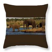 Kalahari Elephants Preparing To Cross Chobe River Throw Pillow