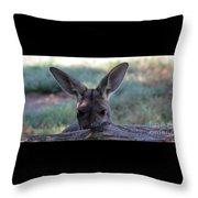 Kangaroo-4 Throw Pillow
