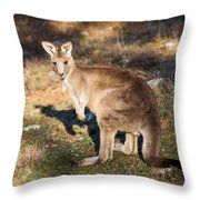 Kangaroo - Canberra - Australia Throw Pillow