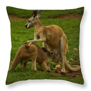 Kangaroo Nursing Its Joey Throw Pillow