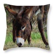 Kansas Country Mule Throw Pillow