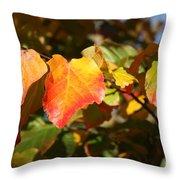 Kansas Fall Leaves Close Up Throw Pillow