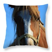 Kansas Horse Potrait Red And White Throw Pillow by Robert D  Brozek