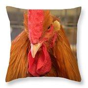 Kansas Red Orange Rooster Close Up Throw Pillow
