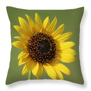 Kansas Wildsunflower With Green Background Throw Pillow