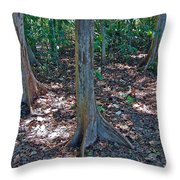 Kapok Trees Along The Trail In Manual Antonio National Preserve-costa Rica Throw Pillow