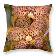 Kasems Delight Throw Pillow