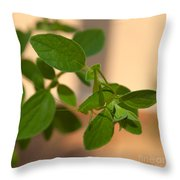 Katydid On Oregano Throw Pillow