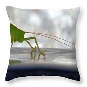 Katydid Reflection Throw Pillow