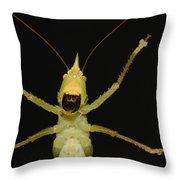 Katydid Underside Ecuador Throw Pillow