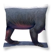 Kayentatherium, A Mammal-like Throw Pillow