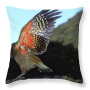 Kea Showing Brilliant Coloration  New Throw Pillow