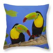 Keel-billed Toucan Pair Throw Pillow