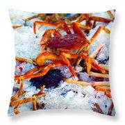 Keep'n The Kool Throw Pillow