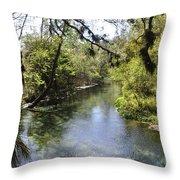 Kelly Springs  Throw Pillow