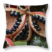 Kelumpang Sarawak Fruit Seeds Sepilok Throw Pillow