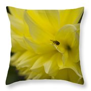 Kelvin Floodlight Dahlia Throw Pillow