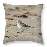 Kentish Plover Throw Pillow