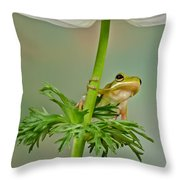 Kermits Canopy Throw Pillow
