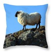 Kerry Hill Sheep Throw Pillow