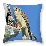 Kestrel At Nest Throw Pillow