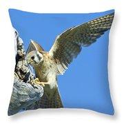 Kestrel With Lizard Throw Pillow
