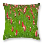 Keukenhof Gardens 25 Throw Pillow