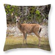 Key Deer Portrait Throw Pillow