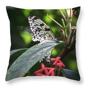 Key West Butterfly Conservatory - Idea Leuconoe Throw Pillow