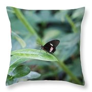 Key West Butterfly Conservatory - In Black White And Orange Throw Pillow
