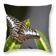 Key West Butterfly Conservatory - In Brown And White Throw Pillow