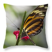 Key West Butterfly Conservatory - Papilio Zagreus Throw Pillow