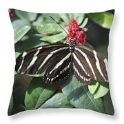 Key West Butterfly Conservatory - Zebra Heliconian Throw Pillow