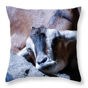 Kid Napping Throw Pillow