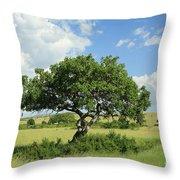 Kigelia Pinnata Tree Throw Pillow