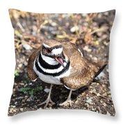 Killdeer Bird Throw Pillow