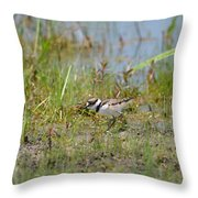 Killdeer Hatchling Throw Pillow