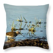 Kildeer Hunting For Worms Throw Pillow
