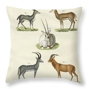 Kinds Of Antilopes Throw Pillow