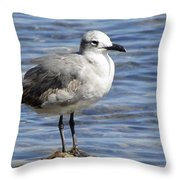 King Of The Rock Seagull Throw Pillow