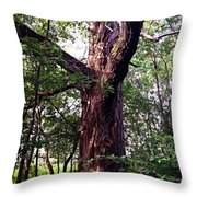 King Of The Timberline Throw Pillow