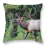 King Of The Valley Throw Pillow