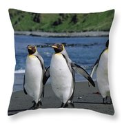 King Penguin Trio On Shoreline Throw Pillow
