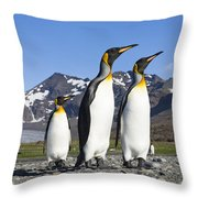 King Penguins St Andrews Bay South Throw Pillow