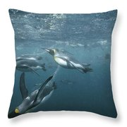 King Penguins Swimming Macquarie Isl Throw Pillow