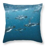 King Penguins Swimming Underwater Throw Pillow
