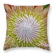 King Protea Flower Macro Throw Pillow