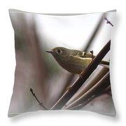 King - Ruby Crowned Kinglet - Bird Throw Pillow