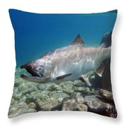 King Salmon And Dardevle Throw Pillow