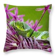 King Swallowtail Caterpillar Throw Pillow